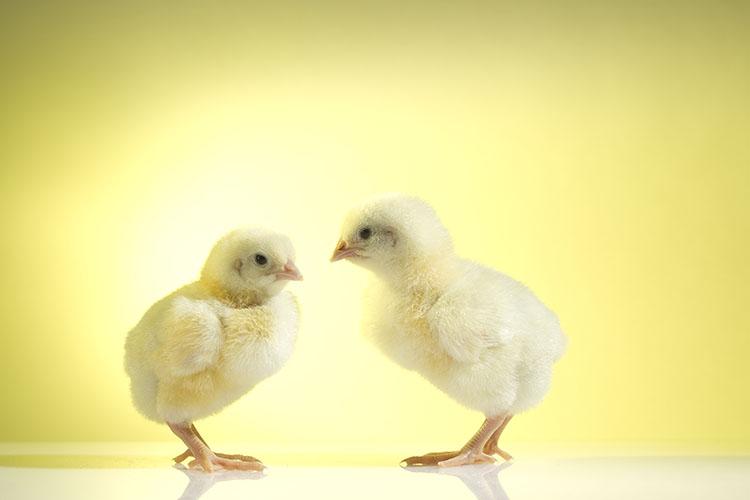 Peexio - photographie studio animaux